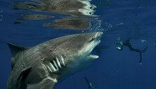 Parem de afirmar que tubarões 'atacam humanos', dizem cientistas