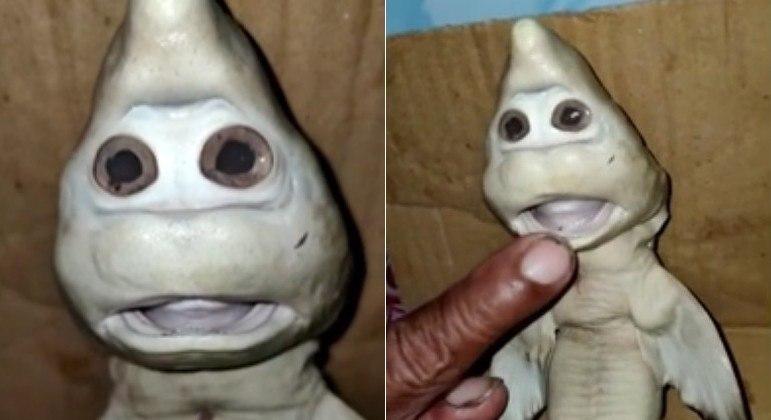 Filhote de tubarão com aparência de Zé Gotinha foi fisgado por pescador na Indonésia