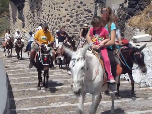 (Crédito: Reprodução/Facebook/Help the Santorini Donkeys)