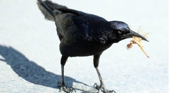 Muitos pássaros e outros animais dependem de insetos para sua alimentação