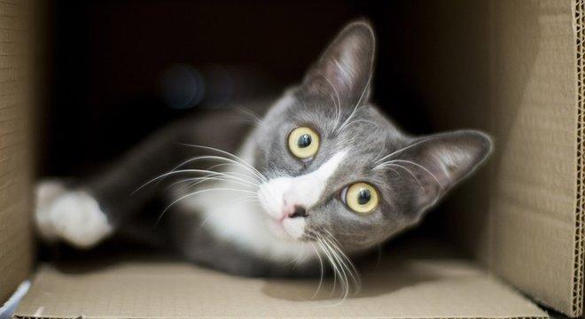 Gatos dentro de casa tendem a ter mais anos de vida - mas precisam de um ambiente adequado