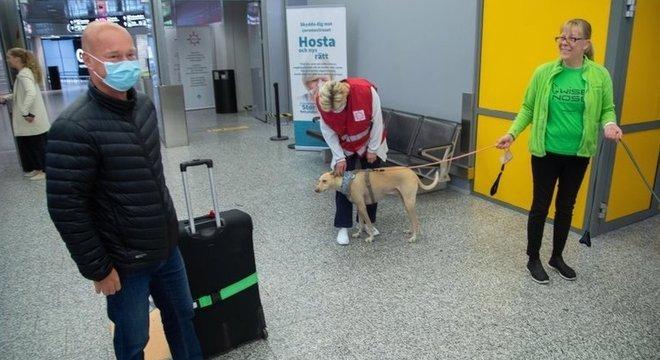 A Finlândia já está usando cães nos aeroportos