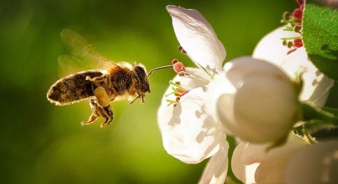 Os insetos também estão desaparecendo lentamente, assim como algumas espécies de aves que se alimentam de insetos
