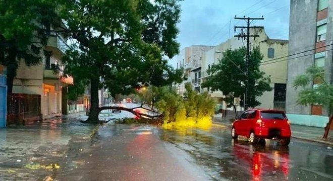 Uma árvore caiu na rua General Câmara Crédito: Defesa Civil / Divulgação / CP