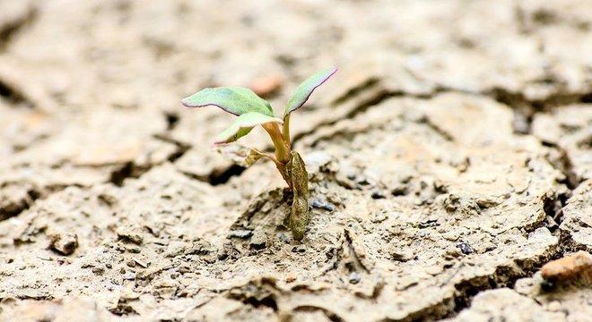 A vida sempre encontra um caminho... e algumas plantas são concebidas para sobreviver, não importa o que aconteça