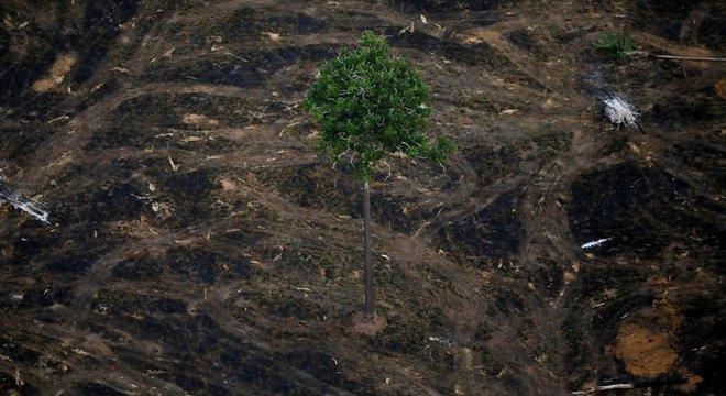Área desmatada perto de Porto Velho; taxa de desmatamento anunciada nesta segunda-feira é a maior desde 2008
