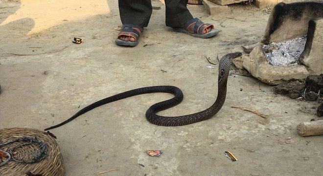 Os Baigas tradicionalmente foram encantadores de cobras