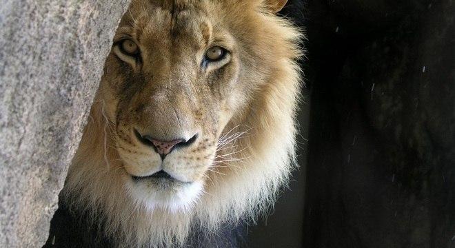 Chegou a hora de prestar contas ao Leão