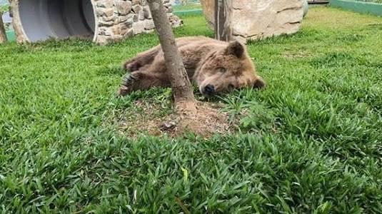 Ursa Rowena morre em santuário de animais em São Paulo (Reprodução/Instagram)