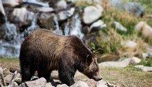 Ataque de urso reacende debate sobre caça na Eslováquia