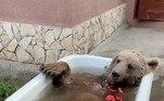 No TikTok (@balu_164), o animal já faz um sucesso tremendo, com 5 milhões de visualizações nos vídeos de banhosVEJA TAMBÉM:Mulher é contida com fita adesiva após tentar abrir porta de avião
