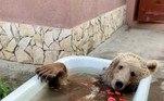 'Balu adora banhos todos os dias. Ele entra [na banheira]... e se entrega', afirmouAnna Prigorodova, uma influencer que se tornou uma espécie de tutora da carreira de Balu no Instagram (@balu.bear64)LEIA MAIS:Aconteceu de novo: píton invade banheiro de senhora na Áustria