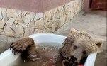 O animal mora em Saratov (Rússia) e foi comprado porRuslan Tsyvilev, que decidiu ajudar um zoológico que precisava de dinheiro após perder público, por causa da pandemia de covid-19