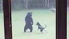 Mais que amigos: urso e cachorro brincam alegremente em quintal
