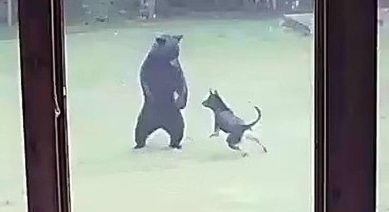 Os dois melhores amigos da vizinhança resolveram brincar
