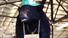 A história do urso lendário que devorou US$ 15 milhões em cocaína