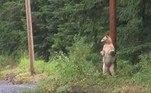 Apenas 1 em cada 10 ursos-negros possuem esse sequenciamento biomolecularVale o clique:Deputada é acusada de usar foto em sessão virtual para fingir presença