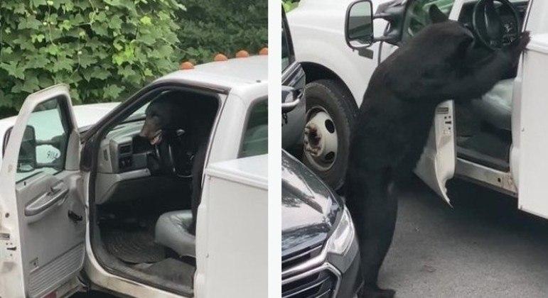 O urso abriu facilmente a porta do carro e vasculhou o interior dele