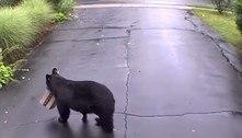 Urso rouba pacote de entrega e é flagrado por câmera de segurança