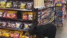 Urso vai às compras em mercearia e deixa clientes em pânico