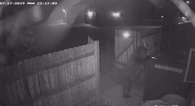 Urso invadiu pátio da loja de maconha e levou contêiner de lixo