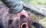 'Após horas de rastreamento, o urso comedor de homens foi morto pela equipe do parque', afirmou a direção do parque, em um comunicadoNÃO PERCA:Baleia furtiva aparece atrás de barco e quase engana turistas