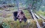 Um urso foi fortemente golpeado com um canivete no pescoço por um turista, após matar e comer um menino de 16 anos. O caso triste e chocante ocorreu no Parque Nacional Ergaki, na Rússia, próximo da fronteira com a Mongólia
