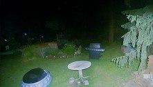 Urso é flagrado se divertindo em piscina infantil deixada em quintal