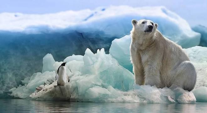 Atualmente, cerca de 26 mil ursos polares já estão sofrendo com alterações fisiológicas
