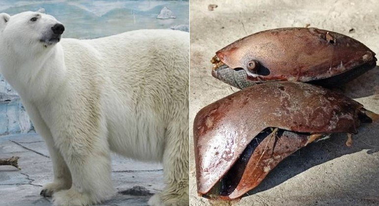 Um urso polar morreu em zoológico russo após ingerir uma bola de borracha
