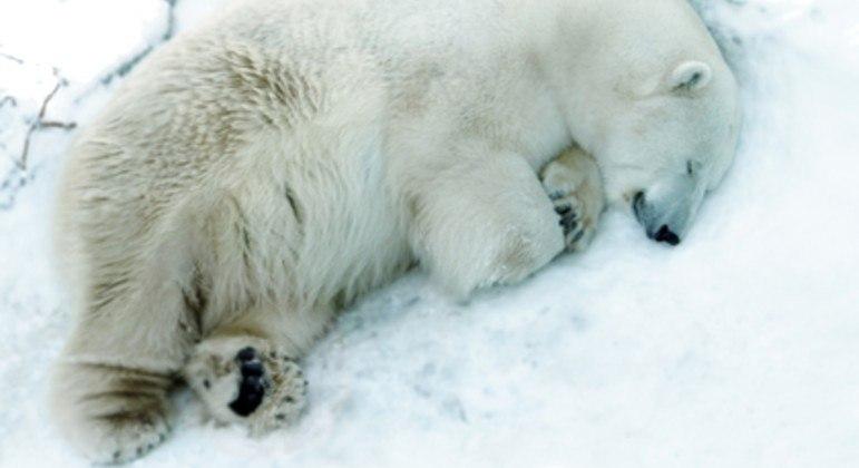 Funcionários do zoológico estão arrasados com a morte de Umka