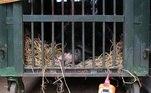 A bile de urso é considerado um item valioso para a medicina tradicional asiática. Os animais geralmente eram mortos para a extração, mas na década de 1980, fazendeiros desenvolveram técnicas para fazer a extração com eles ainda vivos — um buraco é feito cirurgicamente e um tubo de metal é inserido no fígado dos ursos. Nasciam ali as