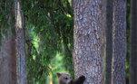 Pelas imagens, é possível ver que a mãe urso esperou até o fim da brincadeira para sair de perto