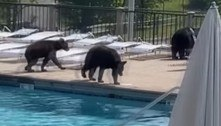 Festa na piscina de estudantes é interrompida por sete ursos