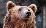 O alerta continua, ensinando as melhores estratégias ao lidar com esses animais vorazes