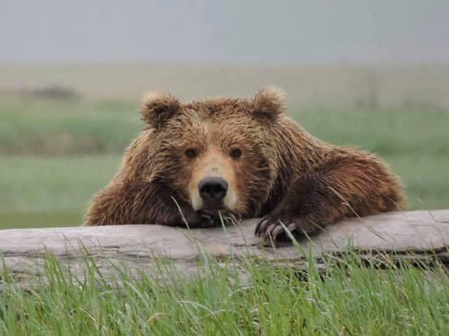 Enquanto muitos moradores dos Estados Unidos redescobrem as belezas da vida natural, o Serviço Nacional de Parques parece um tanto preocupado com as reações de de leigos em passeios naturais. Como, por exemplo, o que eles farão se encontrarem um urso adulto