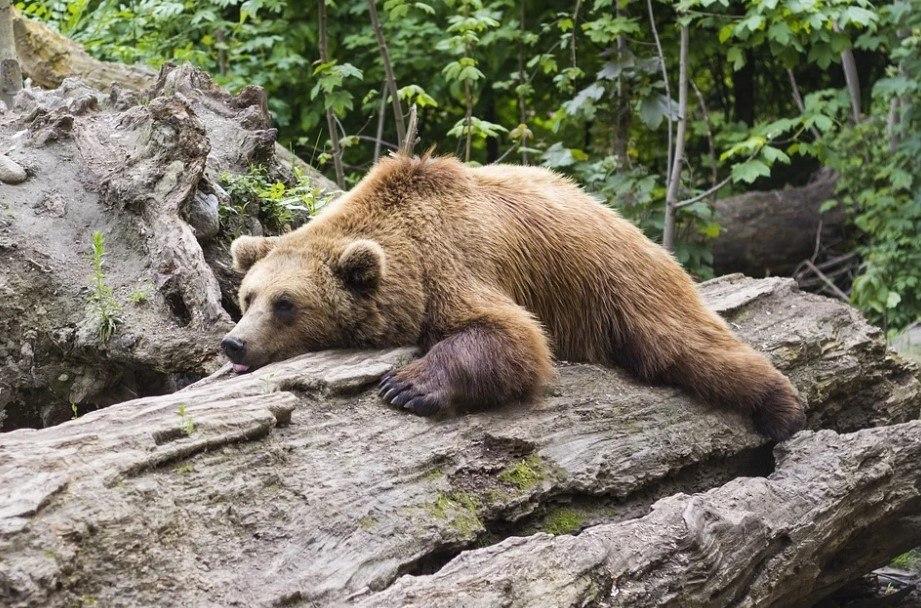 'Por favor, não fuja de ursos ou empurre seus amigos mais lentos na tentativa de se salvar', alerta o comunicadoVEJA ISSO:Fazendeiro acha prótese de perna que paraquedista perdeu no voo