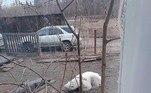 ... foi flagrado dormindo no quintal de uma moradora