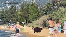 Família de ursos nada em praia e deixa banhistas boquiabertos