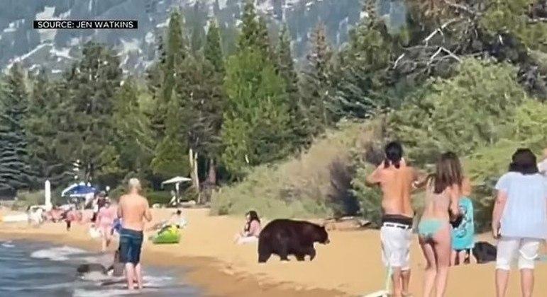 Animais aproveitaram um dia ensolarado na praia