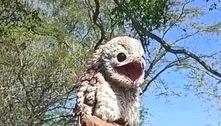 Mulher fica aterrorizada ao ver ave estranha camuflada em cerca