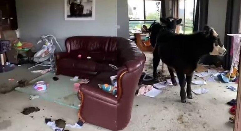 Animais devastaram toda a sala e não pareceram arrependidas