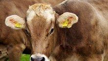Governo confirma 2 casos de 'vaca louca' e venda à China é suspensa