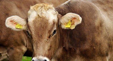 """Casos são """"atípicos"""", diz Ministério da Agricultura"""