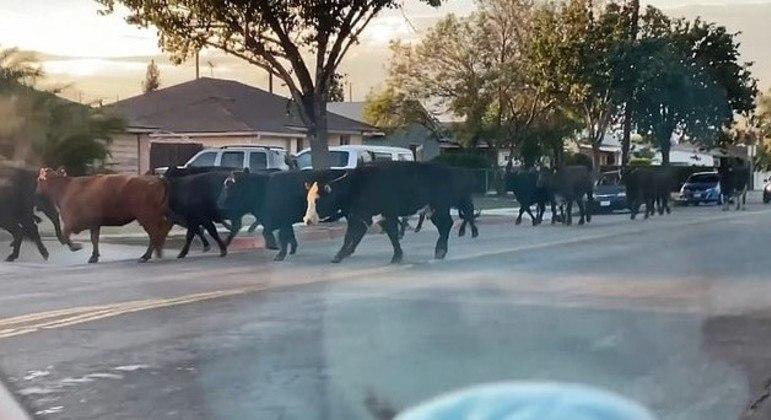 Animais respeitaram as leis de trânsito e andaram na rua