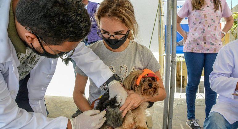 Vacinação Raiva animal João Pessoa