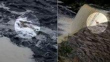 Veado despenca de cachoeira com 15 m de altura e sobrevive