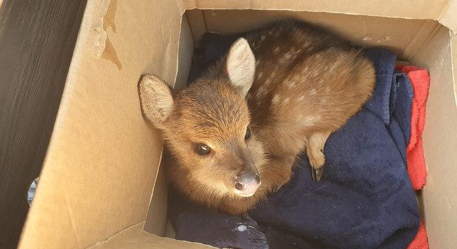 Filhote foi capturado pelos agentes ambientais e vai voltar à natureza