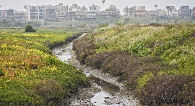 Restabelecer a vegetação é uma parte crucial da agricultura de sequência natural