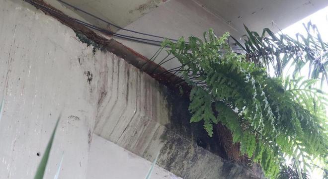 Vegetação acelera degradação do concreto em viadutos